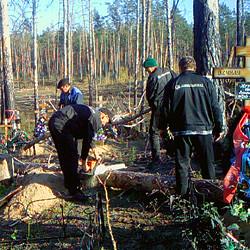 Пилить поваленные деревья в лесу теперь нужно будет