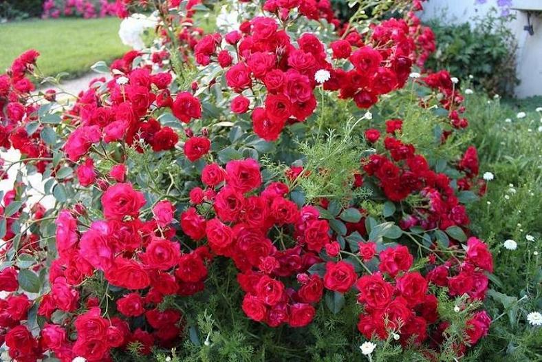 Красивые цветы для сада фото название