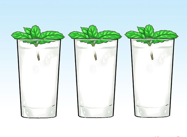 670px-Grow-Mint-in-a-Pot-Step-24