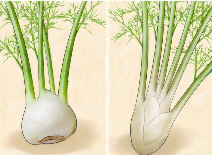 728px-Grow-Fennel-Step-1-Version-2