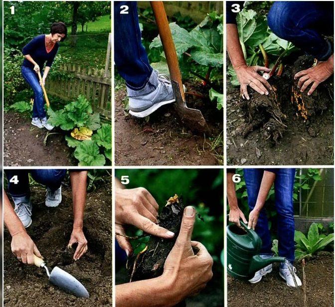 размножение растений черенками и семенами